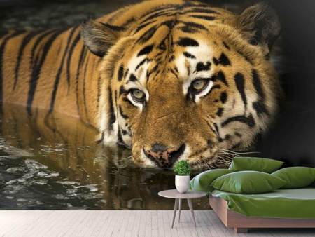 Photo Wallpaper Tiger in the water