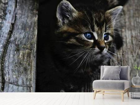 Photo Wallpaper Cats child