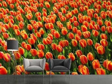 Fotobehang Tulip field in orange