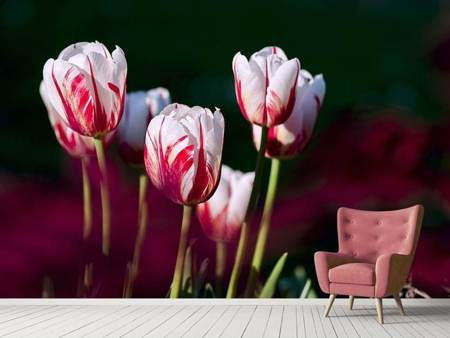 Photo Wallpaper The beauty of the tulips