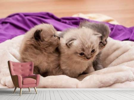 Fotobehang Kitten trio to fall in love