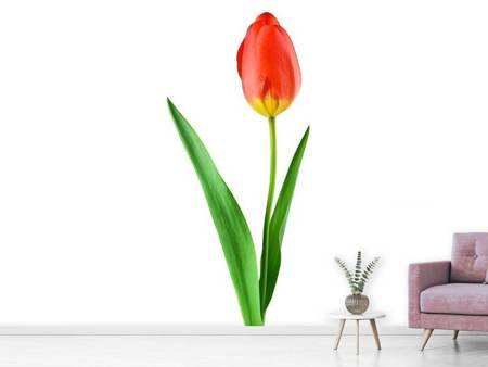Fotobehang The proud tulip