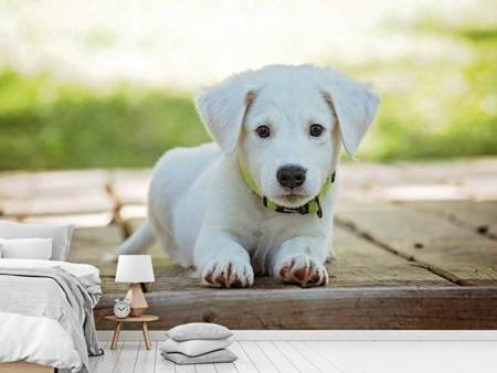Photo Wallpaper Cute dog baby