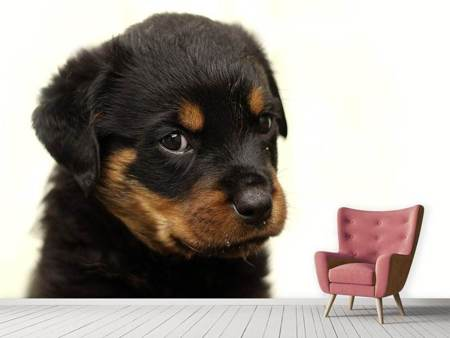 Fotobehang Rottweiler puppy to fall in love
