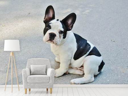 Fotobehang Sweet French Bulldog