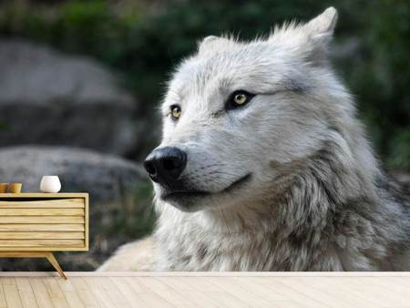 Photo Wallpaper The lonely wolf