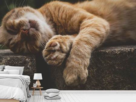 Fotobehang Sleeping cat