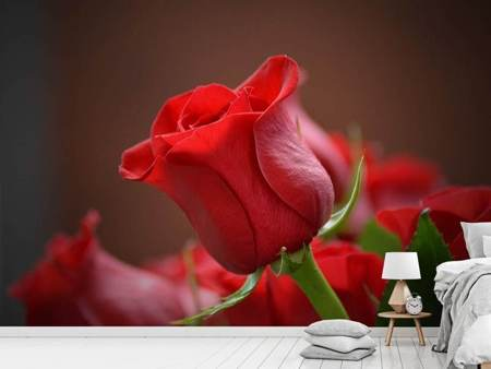 Photo Wallpaper Red rose in XL