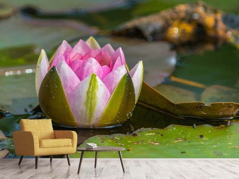 Photo Wallpaper XL water lily in pink