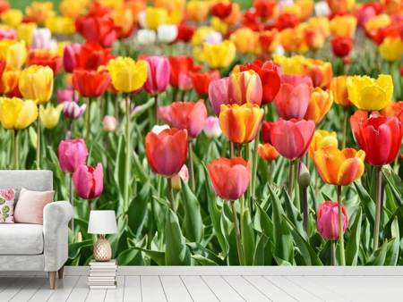 Photo Wallpaper A colorful tulip field