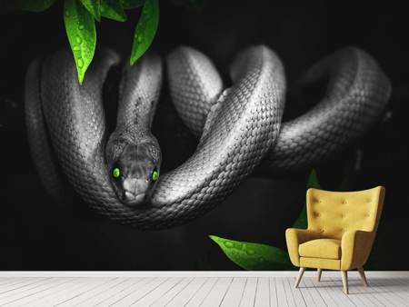 Photo Wallpaper Attention snake