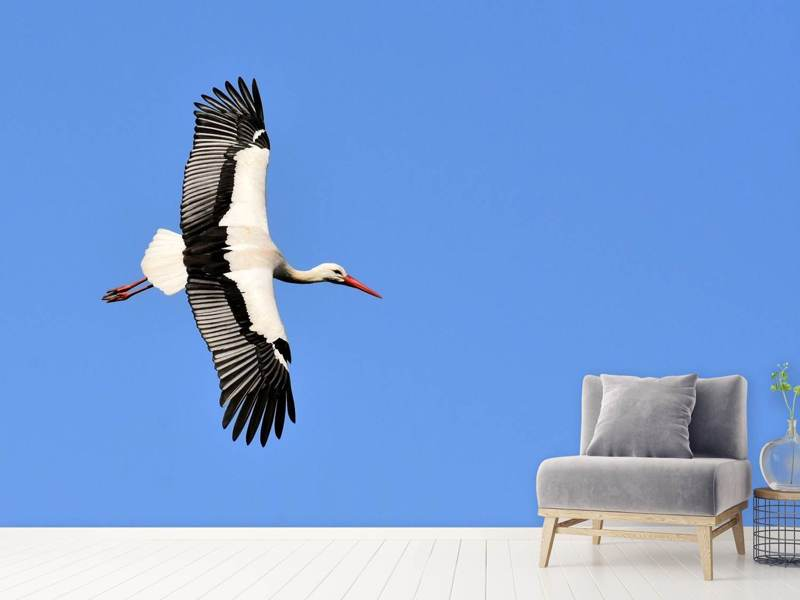 Photo Wallpaper The stork in action