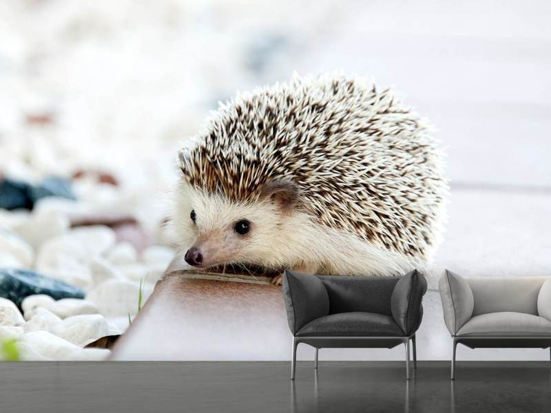 Photo Wallpaper The hedgehog baby