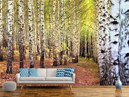 Photo Wallpaper the path between birches