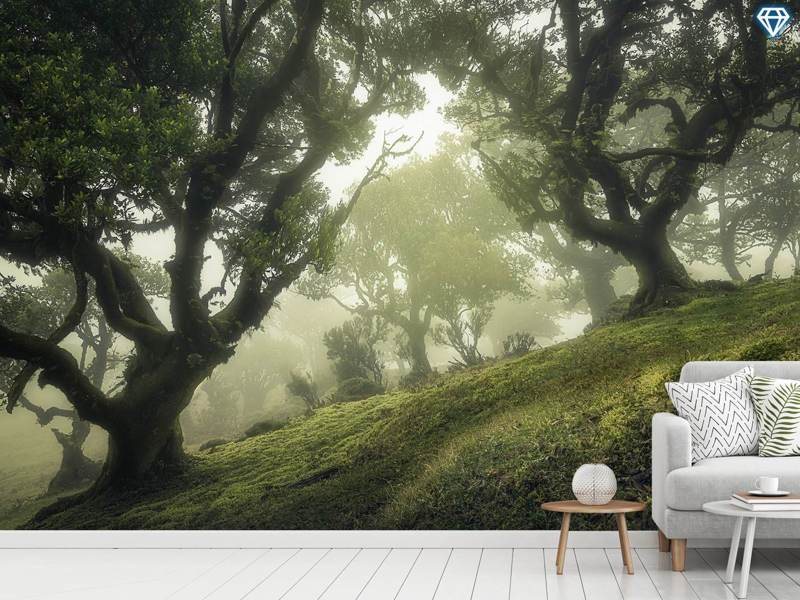 Photo Wallpaper Enchanted Forest