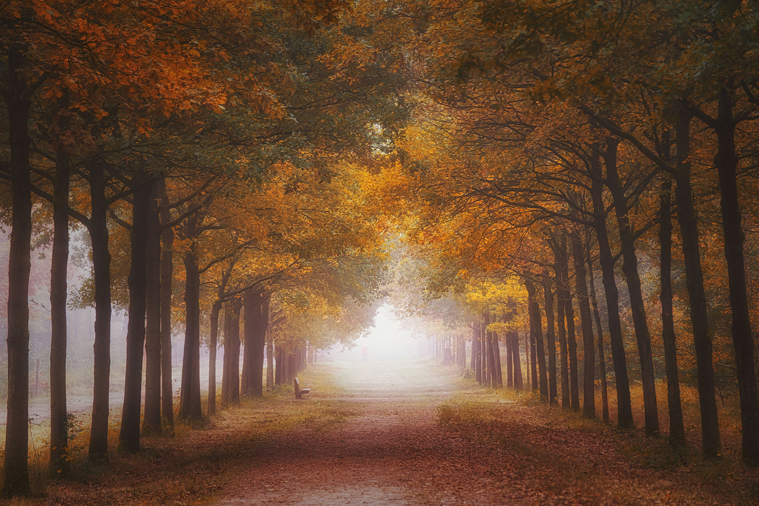 Papier peint photo Foggy Autumn Dream