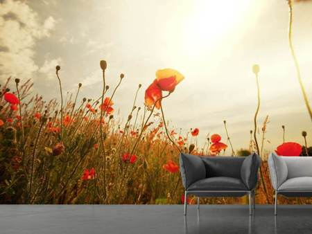 Photo Wallpaper The Poppy Field At Sunrise