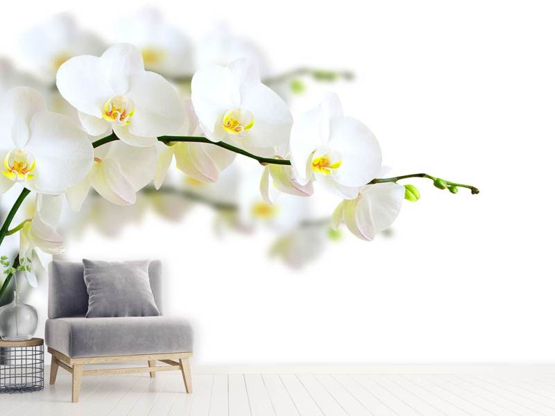 Photo Wallpaper White Orchids