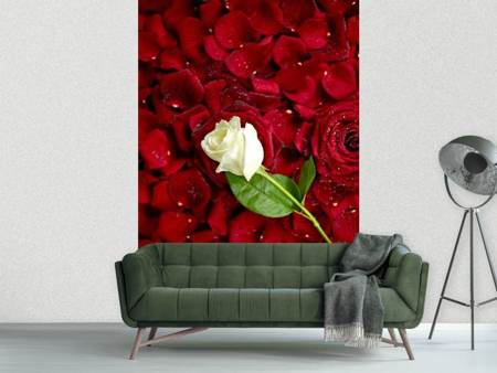 Photo Wallpaper Bed Of Roses