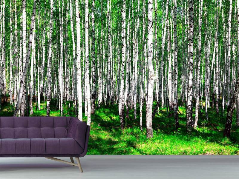 Fotobehang Summerly Birch Forest