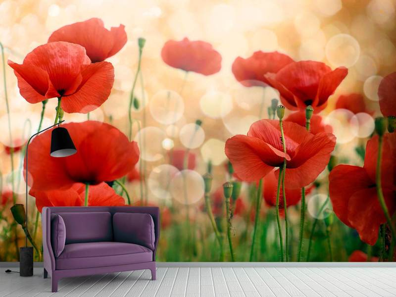 Fotobehang The Poppy